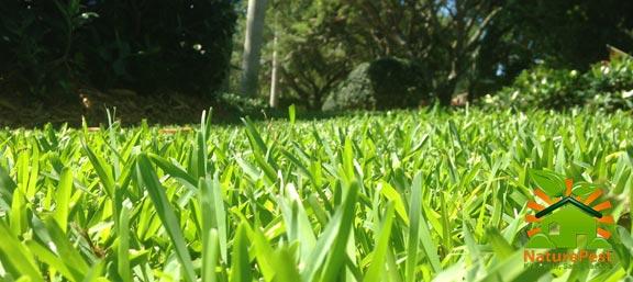 florida grass