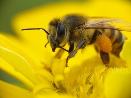 Professionals not responsible for bee colony collapse disorder