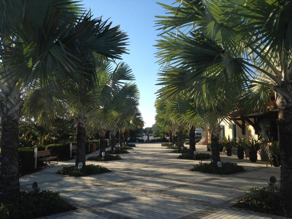 palm tree care florida
