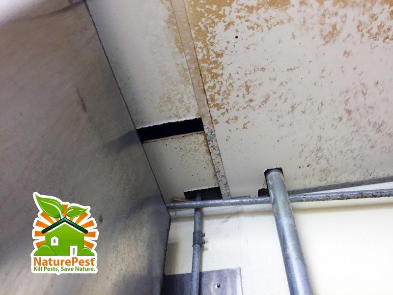 holes gaps ceiling tiles