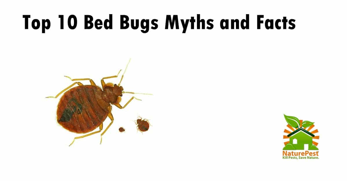 bed bug myths and facts