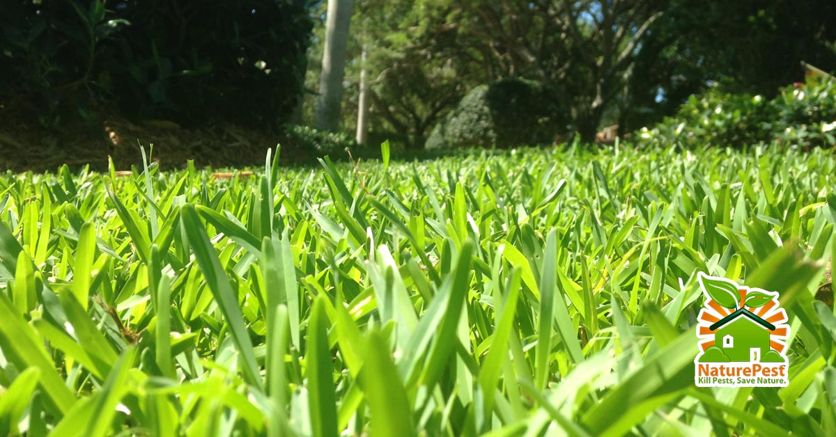 The real cost of real lawn care