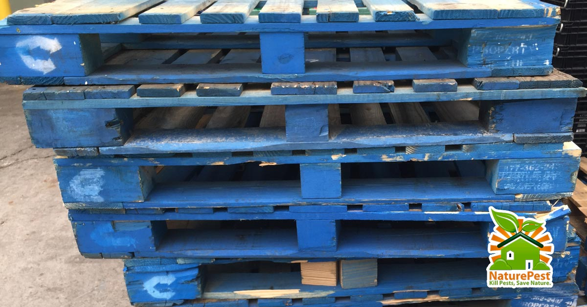 wood-pallets-can-bring-in-pests-to-your-business