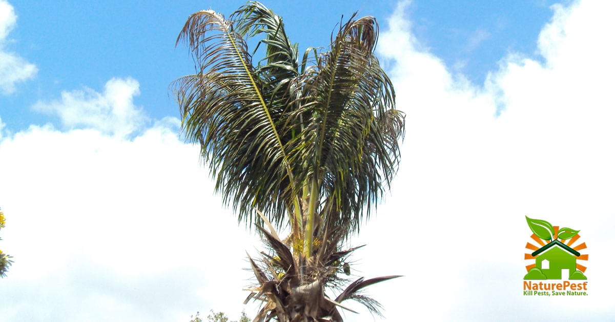 palm tree care mistakes