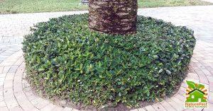 improper plant placement
