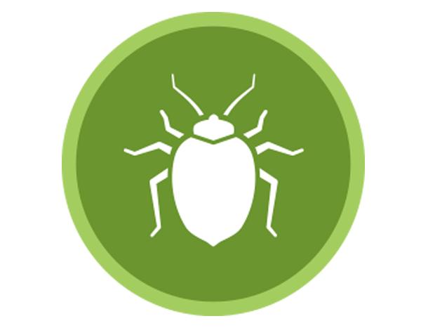 Natural Bed Bug
